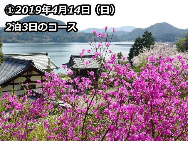 [【バスツアー2泊5食】丹後半島を巡る安野光雅館と花公園「花郷OKADA」、花の寺「如意寺」を訪ねて] 如意寺の境内に自生するミツバツツジ