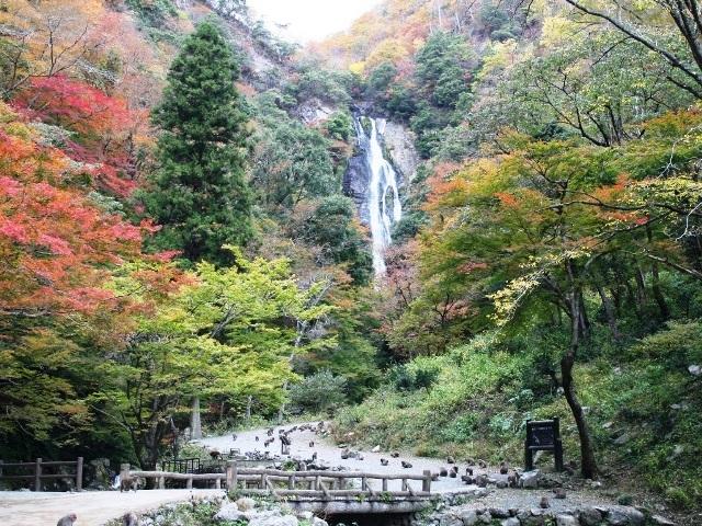 [【6泊12食】蒜山高原でくつろぐ6泊の旅♪のんびり蒜山湯治プラン] 神庭の滝