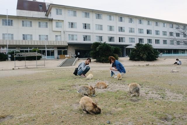 [シンプルにのんびりと【ウサギ島】で滞在プラン(4泊)2019] ホテルの前には人懐っこいウサギがたくさん♪