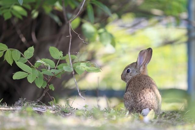 [ストレスフリ-で楽しめる【ウサギ島】で滞在プラン(2泊)2019] 大久野島でのんびりウサギとふれあおう♪