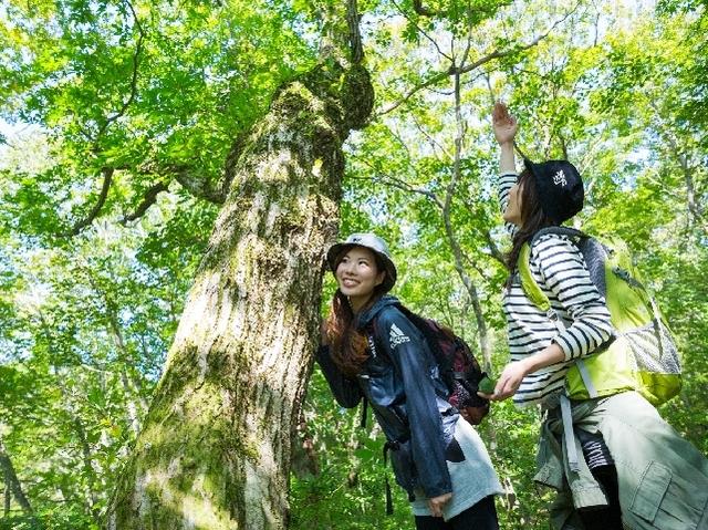 [【連泊】 のんびり滞在3泊プラン(3泊6食付)新たな発見を求めて緑と野の花にあふれる吾妻山へ] 森を歩けば新しい発見がいっぱい