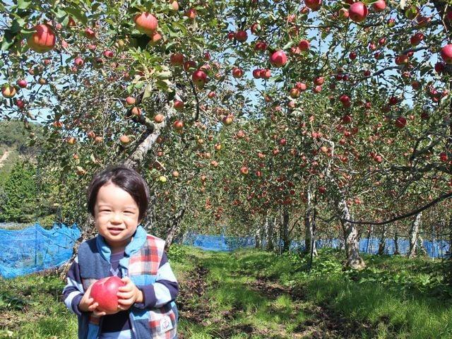 [【あまーいりんごが食べ放題!】 りんご狩り入場券付プラン(2019.9.21~9.30)] あまーいりんごはいかが?