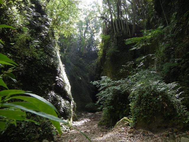 [【四国の秘境巡り】 シダの群落「伊尾木洞」と日本三大鍾乳洞「龍河洞」を巡る旅] 伊尾木洞