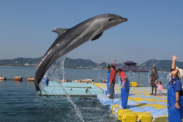[【GoToトラベルキャンペーン割引対象】ドルフィンセンター入場チケット付き宿泊プラン] 日本ドルフィンセンターでイルカと遊ぼう