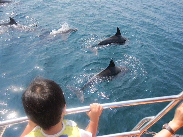 [思い出の体験をイルカウォッチング乗船付宿泊プランイルカに出会える確率は驚きの99%!] 人懐っこいイルカは船に近づいてくることも!手が届きそうな距離に驚くこともあります。