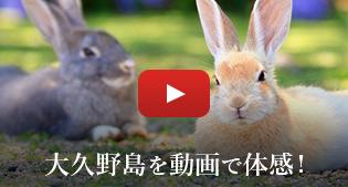 大久野島を動画で体感!